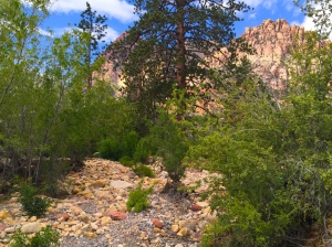 the river bed....dry and still lush in the desert.