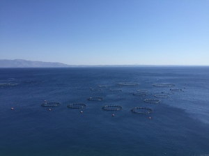 Fish farms in the Aegean Sea on the way to Varthy.