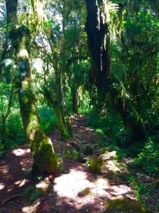 Last of the rainforest........